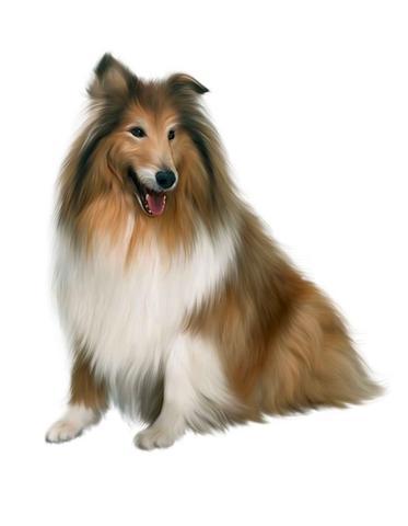 dog_medium