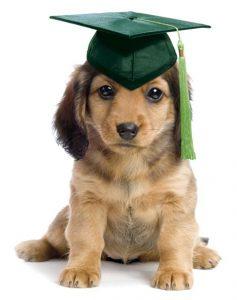 dogschool