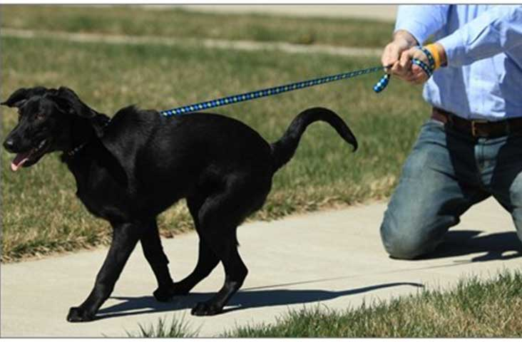 Dog-training-