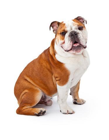 dog_large