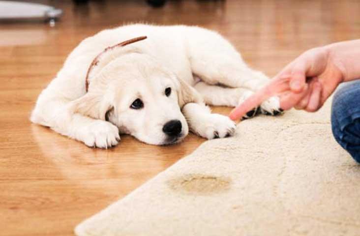 Excretory-dog-