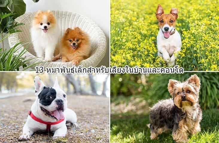 Small-breed-dog